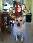 平衡力极强的狗狗