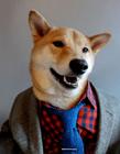 英俊柴犬演绎流行男装