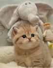 猫卖萌图片