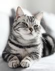 猫的表情特写摄影作品