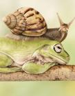 蜗牛从青蛙背上爬过