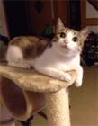 猫动态表情