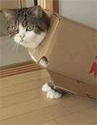 搞笑的猫动态图