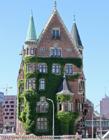 被绿色植物覆盖的房屋
