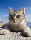 土耳其街头流浪猫