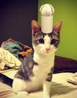 猫咪卖萌帽子造型