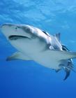 鲨鱼搞笑gif动态图片