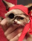 美国独眼猫海盗造型