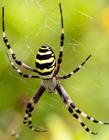 蜘蛛搞笑gif动态图片