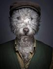 当狗狗穿上主人的衣服