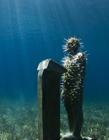 雕塑家打造海底艺术品