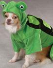 狗狗万圣节卖萌装扮