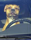 宠物坐车搞笑照