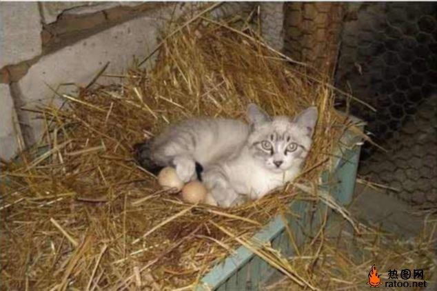 关于猫的搞笑图片-动物图片-热图网图片哭得表情真人带字图片图片
