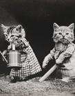 一个世纪前的猫摄影作品