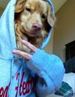搞笑狗自拍照