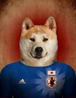 狗狗化身足球运动员