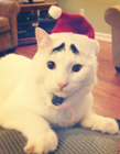 八字眉的猫