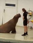 可爱小海豹做体操gif动态图片