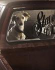 摄影师实拍车里的狗摄影图片