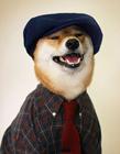 宠物狗造型