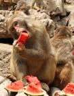 郑州动物园猕猴避暑花样百出