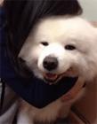 狗搞笑gif