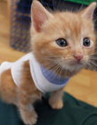 英国护士用袜子给遗弃小猫做衣服