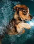 摄影师记录宠物狗潜水搞笑瞬间