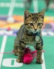 猫咪碗橄榄球赛