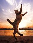 摄影师拍摄猫咪悬浮瞬间,猫摄影作品
