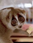 动物搞笑gif图