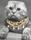 猫咪担任Holiday系列珠宝广告片模特