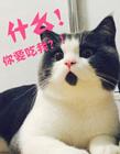 惊讶猫,惊讶表情猫,吃惊猫