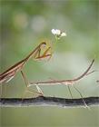 螳螂图片大全
