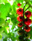 中国蔬菜摄影大赛获奖作品