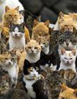 日本猫岛 日本的猫岛旅游