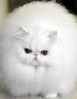 可爱的猫咪图片