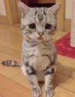 委屈猫走红