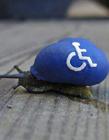 国外艺术作品 艺术家在蜗牛壳上作画惟妙惟肖