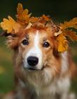 狗狗可爱的萌�A图片
