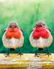 鸟类摄影作品欣赏