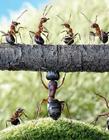 小蚂蚁搬家图片