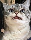吸血鬼猫咪