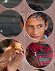巴勒斯坦儿童的日常:在谷仓与山羊玩耍