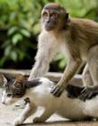 动物之间的友谊