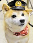 日本消防犬可可爆红
