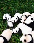大熊猫可爱图片