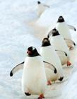 史上最治愈系写真《北极・南极的微笑》