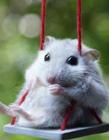 仓鼠搞笑gif,仓鼠搞笑动态图